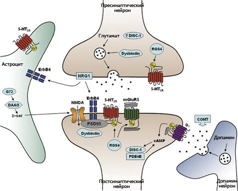 что синапсы работают